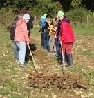 Schüler graben etwas auf einer Wiese um
