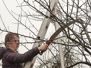 Kinder mit gefälltem Baum Mädchen zerschneidet Ast