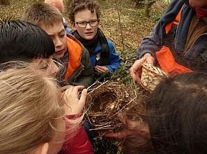 Kinder mit gefälltem Baum Schüler betrachten ein Vogelnest
